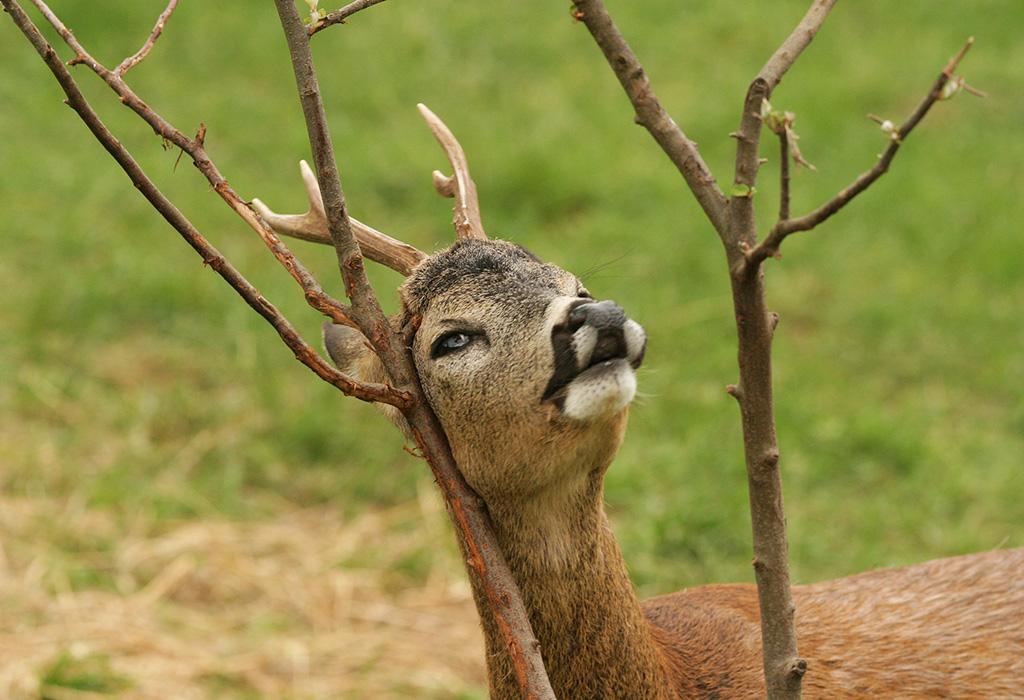 Lika & Velebit Hunting
